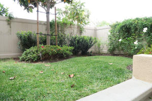 Backyard Grass